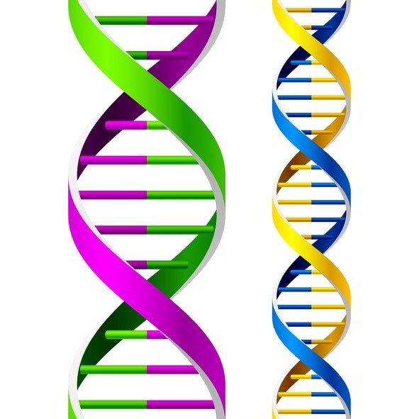 Genealogy DNA Testing