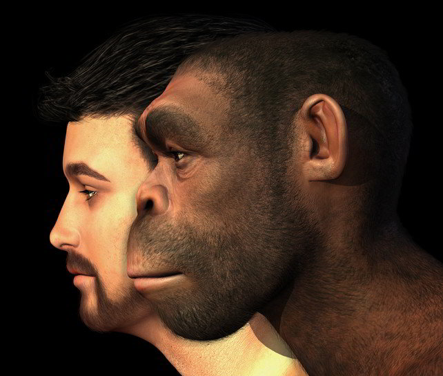 Neanderthal DNA in Humans